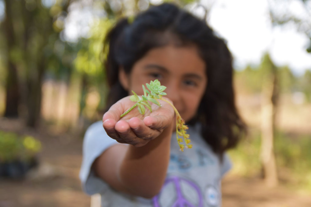 Girl with seedling ready for sowing